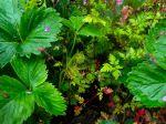 Un jardin dense et couvert de plantes pour économiser l'eau