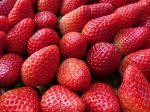 Questions fréquentes sur les fraises