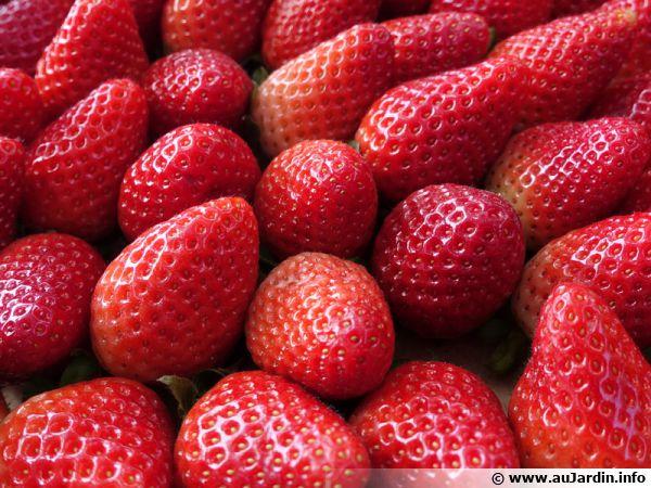 Des fraises en cagette...