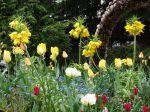 Fritillaire impériale, Couronne impériale, Fritillaria imperialis