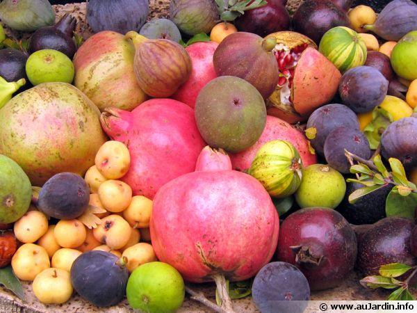 Des fruits de saison pour une salade de fruits
