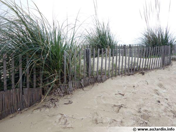 Ganivelle en bordure de plage pour retenir le sable et limiter le passage des promeneurs