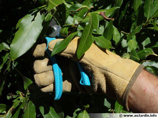 Des gants pour jardiner