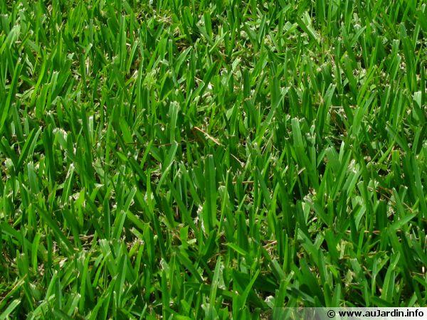 Les gramin es composant le gazon for Tarif de tonte de pelouse