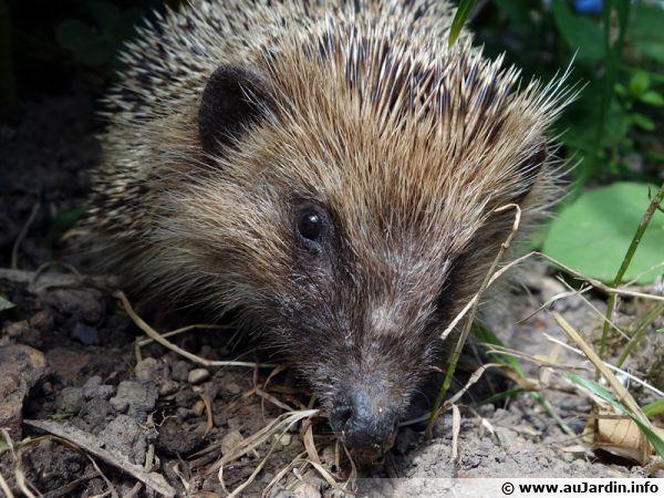 De l 39 importance des petits animaux du jardin for Taupe dans le jardin