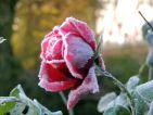 Empreinte poétique d'une rosée glacée