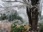 La belle cépée de l'orme, majestueux dans sa tenue hivernale