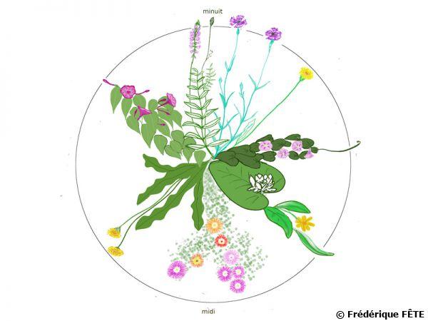 Les fleurs s'épanouissent, se ferment, au long de la journée et de la nuit...