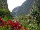 La forêt de l'île de la Réunion, un canyon