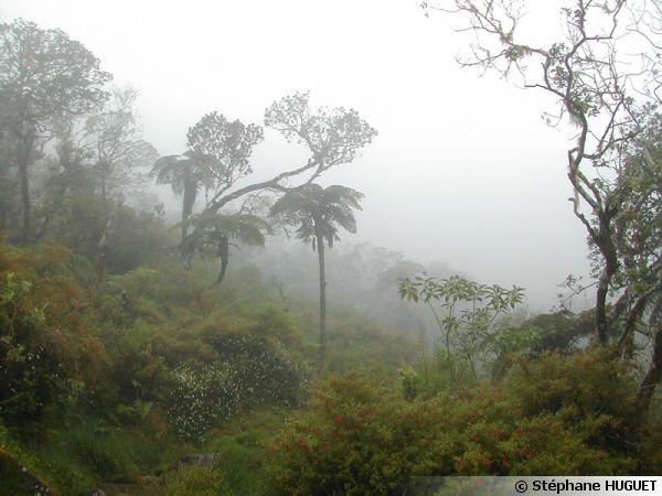 La forêt de l'île de la Réunion