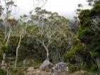 La forêt de l'île de la Réunion, sentier de randonnée
