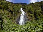 La forêt de l'île de la Réunion, le voile de la mariée
