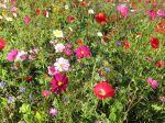 Slow flowers, des fleurs éco-responsables