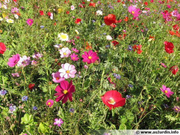 Jachère fleurie, de quoi composer de beaux bouquets de saison