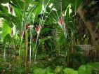 Ambiance tropicale au jardin de Balata