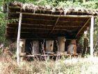 Le rucher du jardin botanique médiéval de la chevalerie de Sace