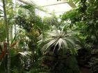 Intérieur d'une serre du Jardin botanique de l'Université de Strasbourg