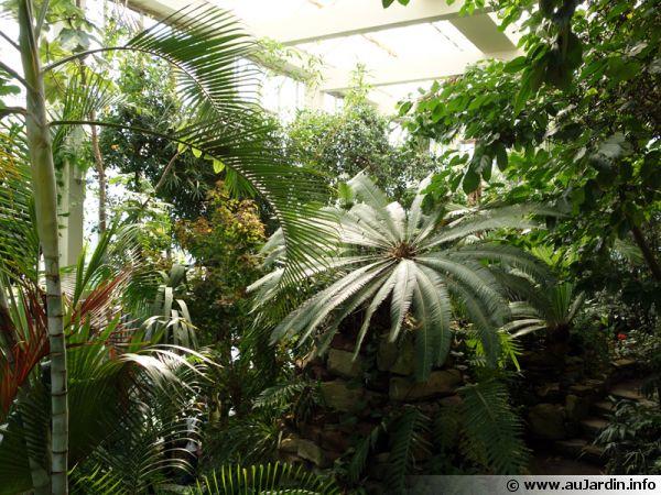 Serre chaude du jardin botanique de Strasbourg