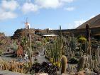 Le jardin de cactus de Lanzarote, vue sur le moulin
