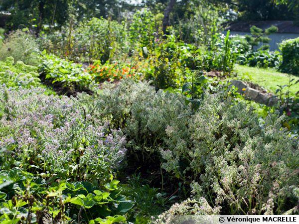 Le Jardin de Kerblouze, un jardin de permaculture
