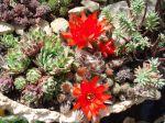 Jardins miniatures, invitation au voyage
