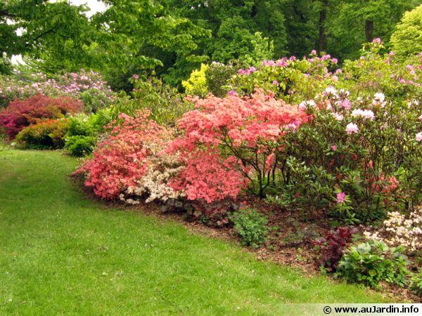 Un jardin opulent sans se ruiner