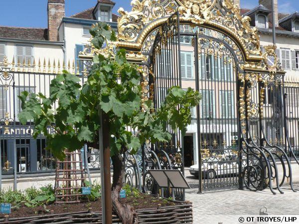 Le jardin des Plantes Médicinales à Troyes