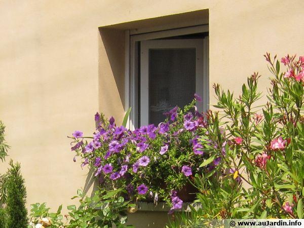 Une jardinière à la fenêtre