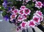 Composer une belle jardinière de printemps