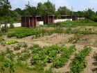 Les jardins familiaux