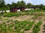 Des jardins familiaux aux jardins partagés