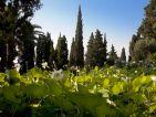 Villa della Pergola, le bassin de lotus