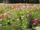 Accueillir la biodiversité en juin