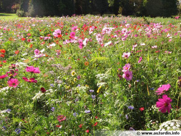 Des herbes folles et des fleurs diverses