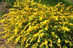10 arbustes résistants aux grands froids