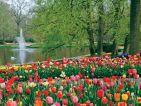 Le parc de Keukenhof en Hollande, bassin et sa fontaine