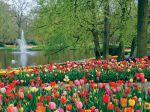 Le parc de Keukenhof en Hollande