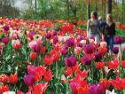 Le parc de Keukenhof en Hollande, allée