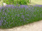 10 fleurs parfumées pour le jardin