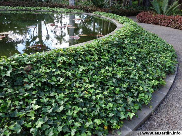 Un talus couvert de lierre, source de biodiversité