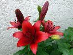 La symbolique des fleurs