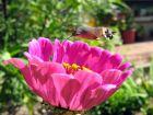 Les lépidoptères ou papillons