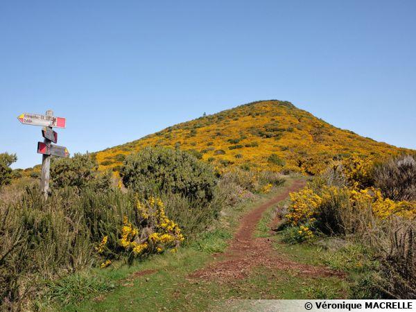Madère, découverte de la végétation du plateau Paùl da Serra