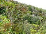 Les forêts sèches de Martinique