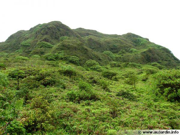 La savane des sommets de Martinique