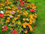 Comment faire durer les fleurs au jardin?