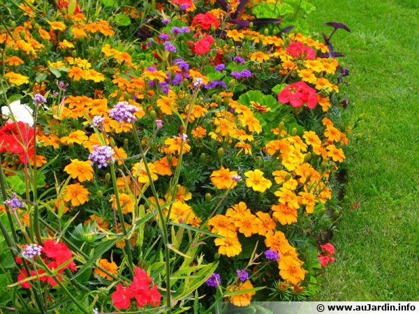Quelques  secrets pour faire durer les fleurs au jardin