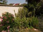 Des plantes méditerranéennes dans son jardin