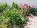 Planter des vivaces partout