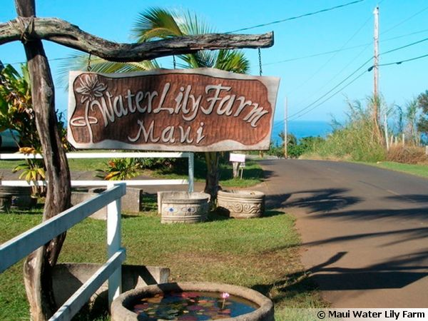 La Maui Water Lily Farm